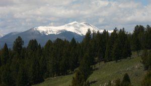 Black bear hunting Montana